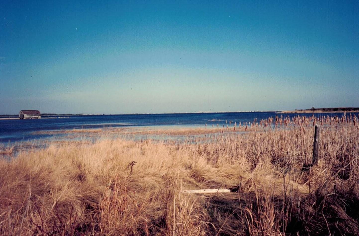 Beachphoto12-28-2020 (2)